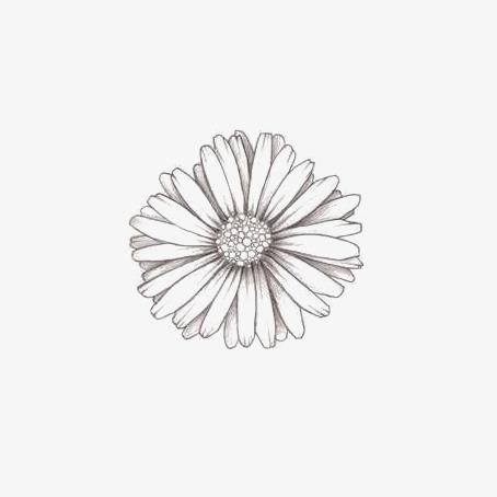 Dibujo De Flores Pintado A Mano De Flores Flores Blancas Fresco