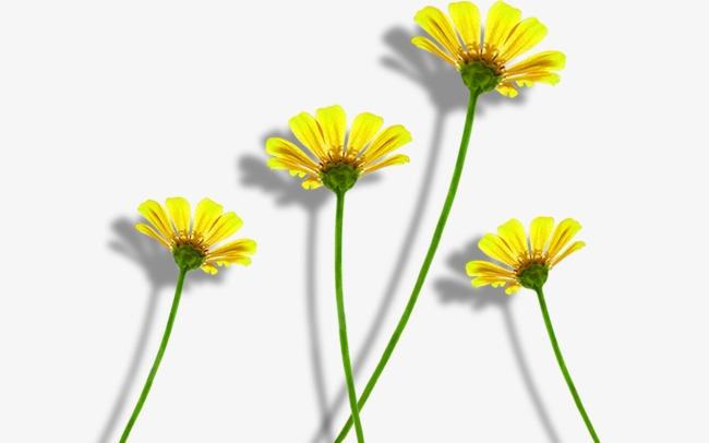 Las Pequenas Flores Amarillas Flores Silvestres Flores Flores