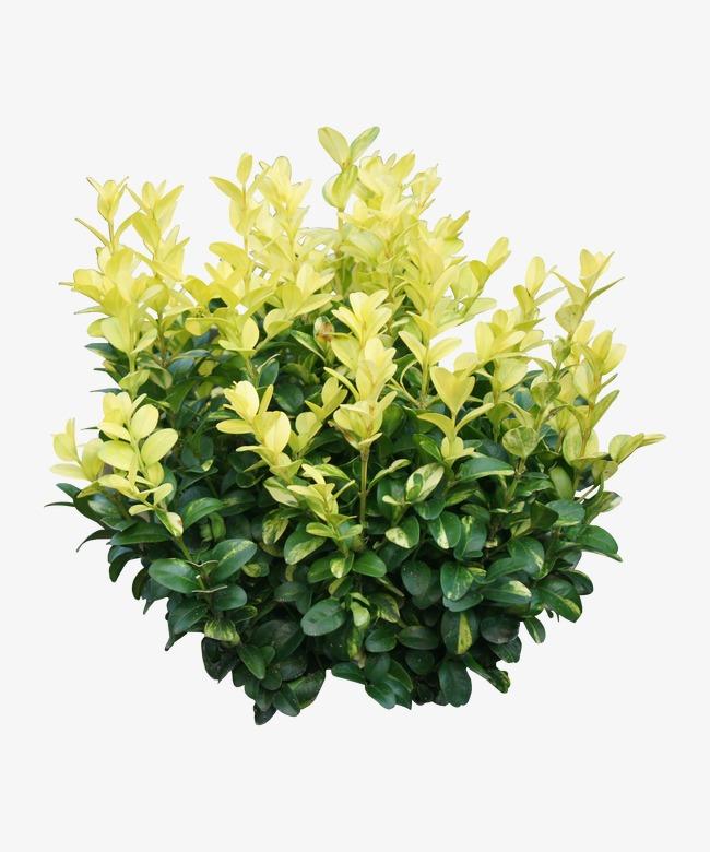 Der Frühling Dekorative Pflanzen Grün Der Frühling Dekoration