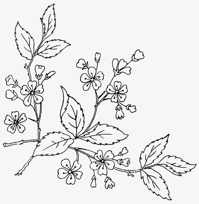 feuilles de vigne sur les fleurs les fleurs les feuilles
