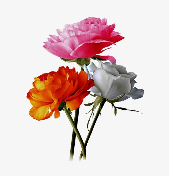 Trois Des Fleurs De Couleur Differente Les Fleurs Fleur Jaune Des