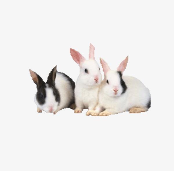 Tres Conejos Conejo Animal Conejo Blanco Imagen PNG para Descarga ...