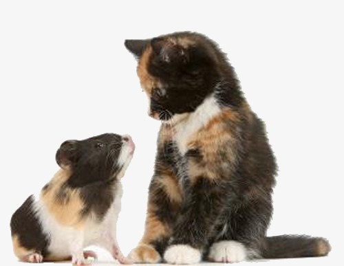 Kot I Mysz Malowane Realizmu Kot Obraz Png I Kliparty Do Pobrania Za