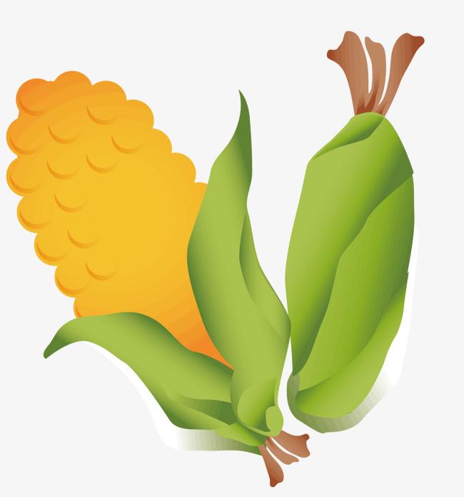 Dua Corn Vektor Ilustrasi Dua Corn Kulit Jagung Png Dan Vektor Untuk