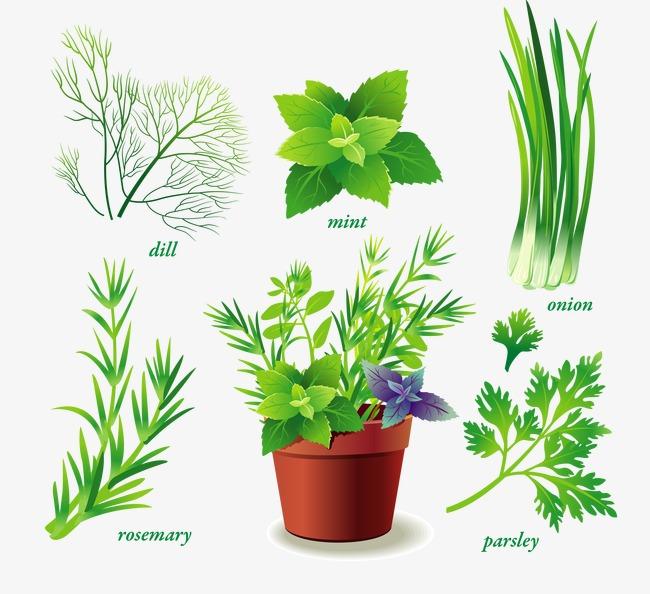Variedad de verdes plantas ornamentales variedad de verde for 10 plantas ornamentales