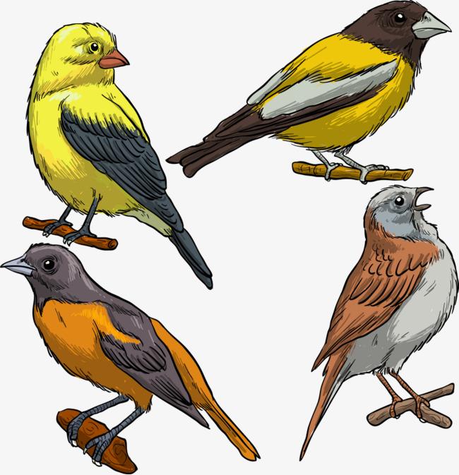 L Oiseau Sur La Branche De Vecteur Les Oiseaux Petit Oiseau Dessin