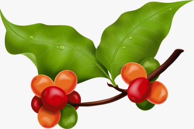 Vector Color Fruta Color Del Fruto Dibujos De Frutas Vector De