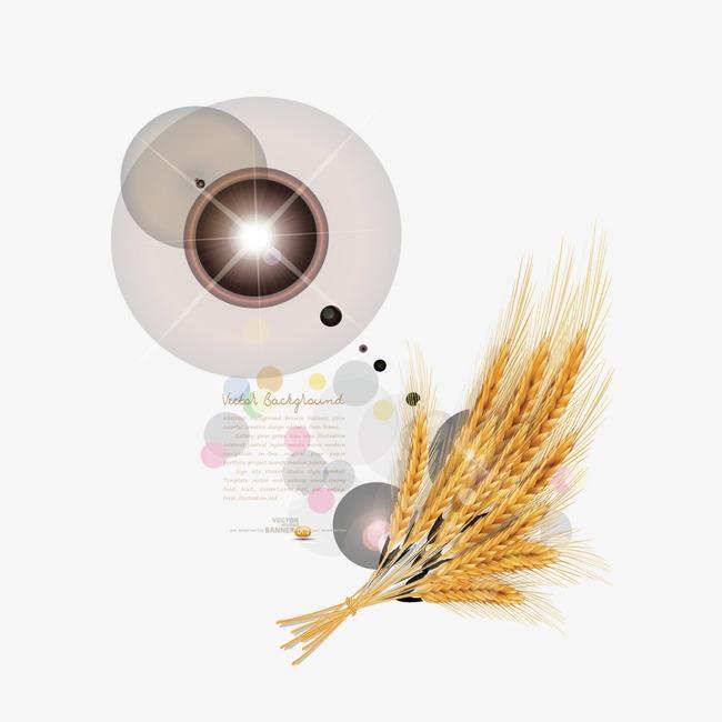 Lo Schema Del Vettore Di Cereali Il Grano La Spiga Di Grano La Luce