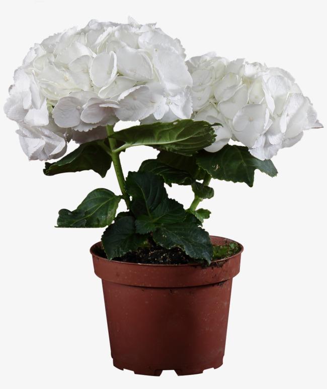 цветок фото в горшке