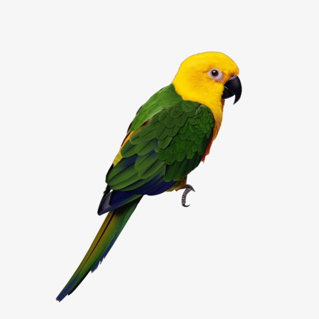 yellow head green body bird head clipart bird clipart yellow head