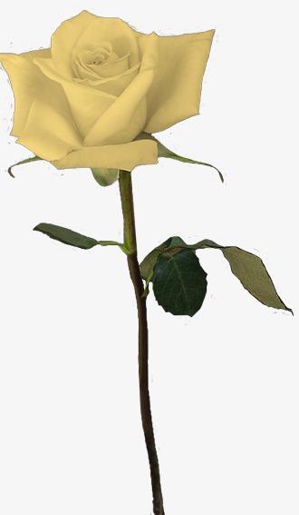 Un Bouquet De Roses Jaunes Jaune Rose Bouquet De Fleurs Image Png
