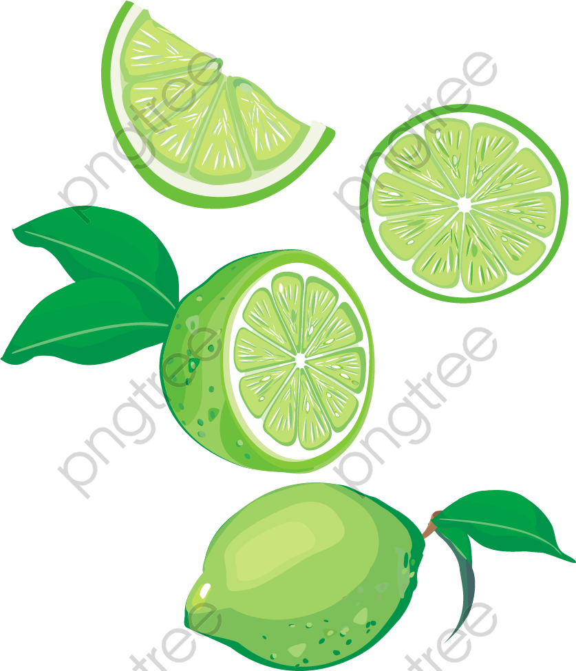 lime vector png