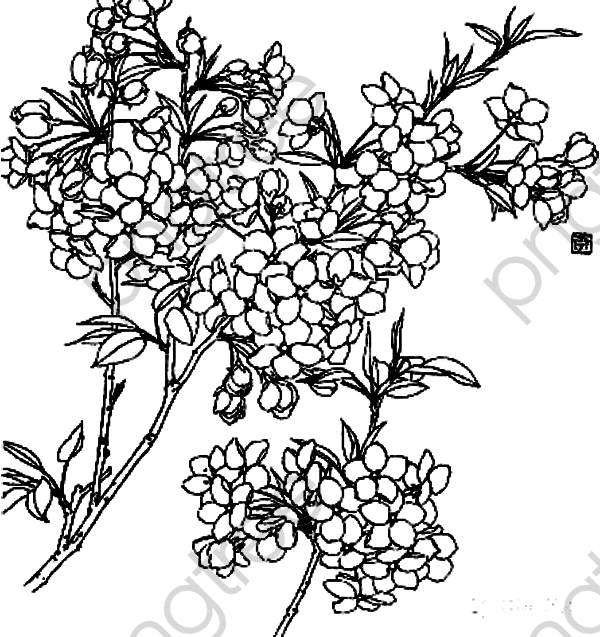 Transparent Flowers Line Drawing Branch Png Format Image With Size