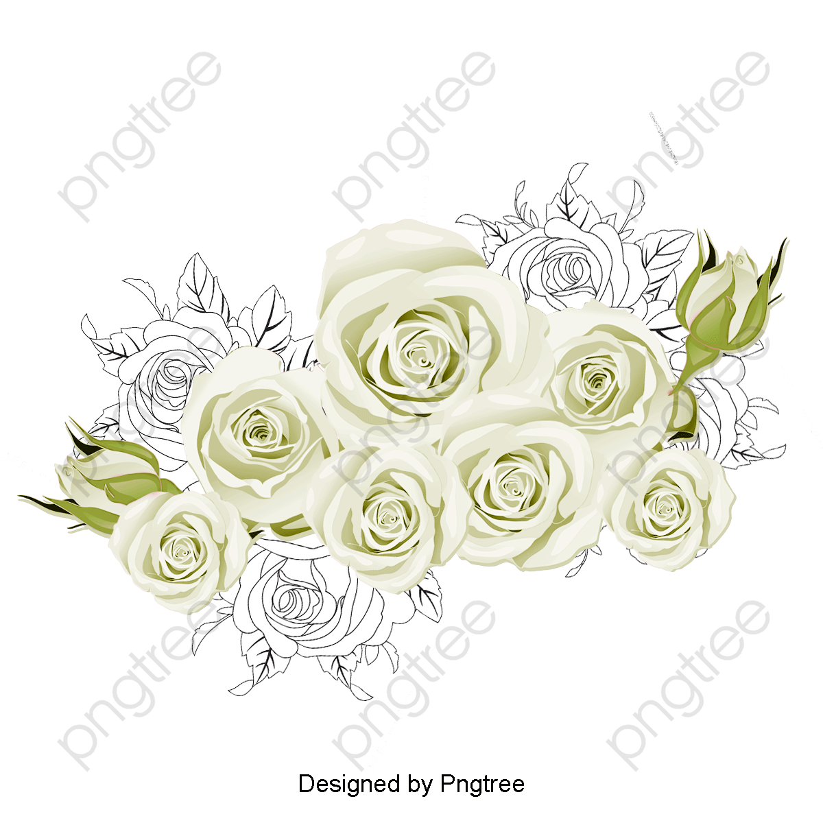 Transparent White Roses Png Format Image With Size 1200 1200 Preview