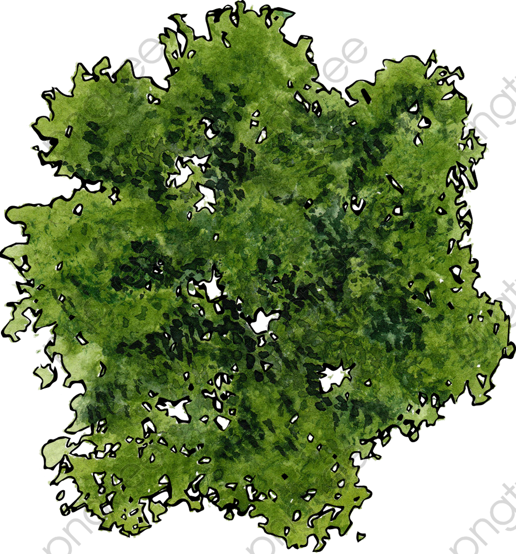 Transparent a top view of a green tree PNG Format Image ...