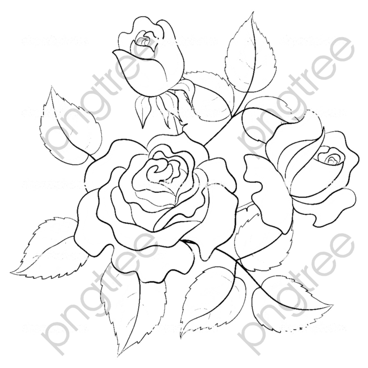Transparent Hand Painted Roses Line Drawing Png Format Image With