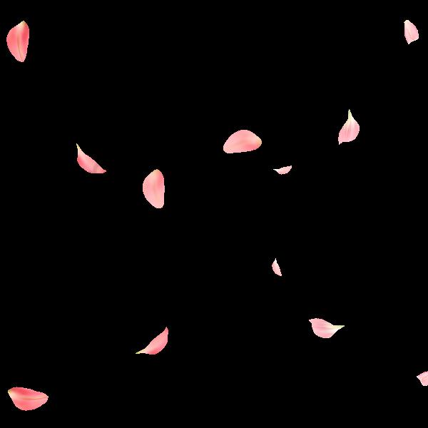 Rose Petals, Petal, Falling Petals PNG Clipart Image and PSD File for Free Download