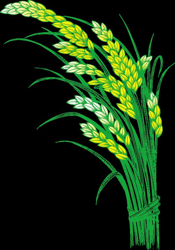 無料ダウンロードのための稲穂米米 稲 米 稲穂png画像素材