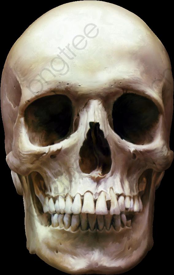 le squelette de la t u00eate cr u00e2ne de la t u00eate le squelette de