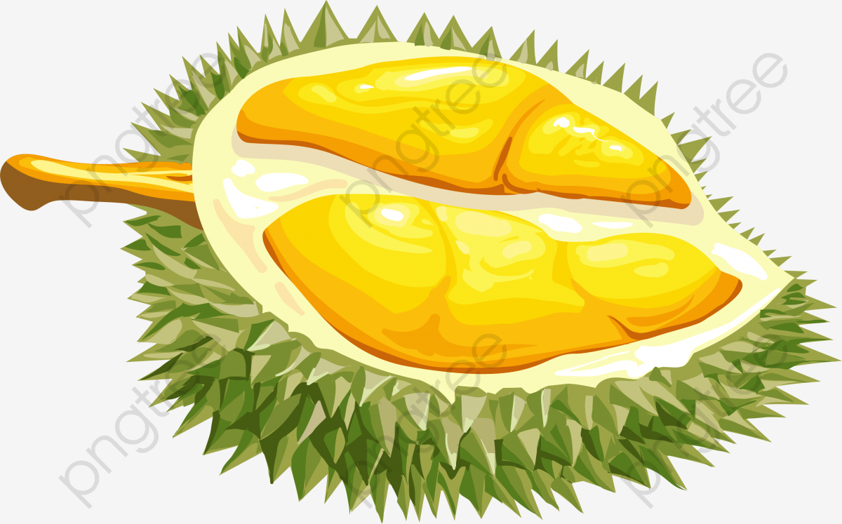 cartoon durians frais un durian cartoon forme vectorielle