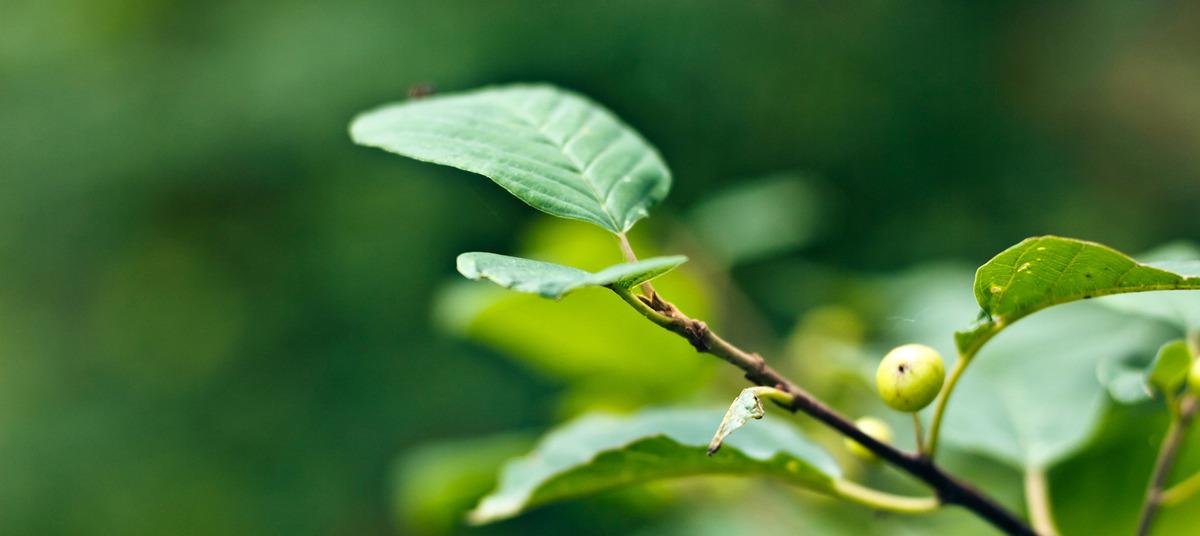 Insect Mantis Arthropod Walking Stick Background, Leaf, Close, Spring, Background image