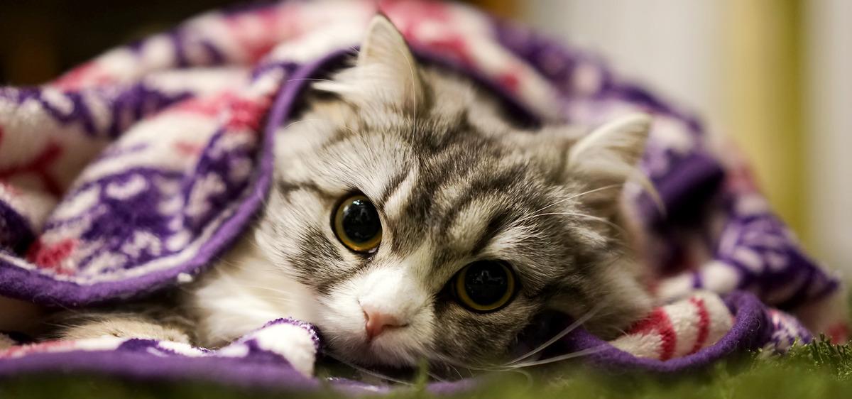 Con mèo Kitty nền Thú Cưng Whelp Hình Nền
