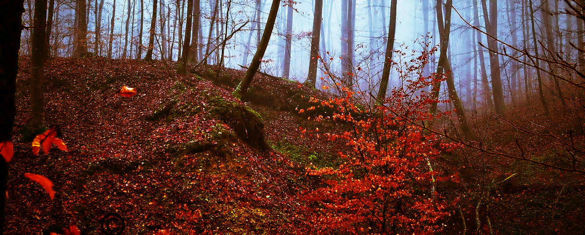 低木木質植物維管束植物の木の背景 秋 落下 景観 背景画像