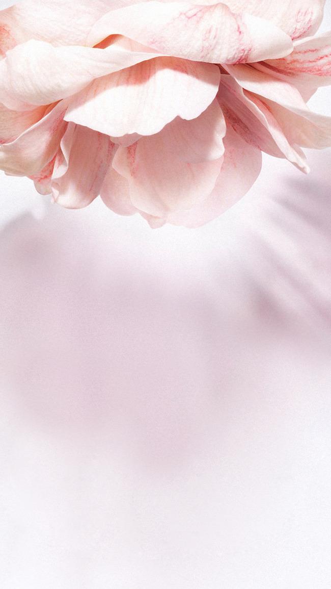Fleur Pantoufle Euphorbe Esule Lily Shrub Contexte Plantes