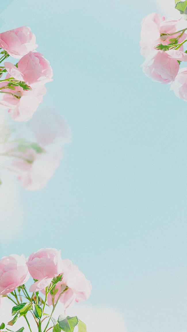 Картинки цветы нежные вертикальные