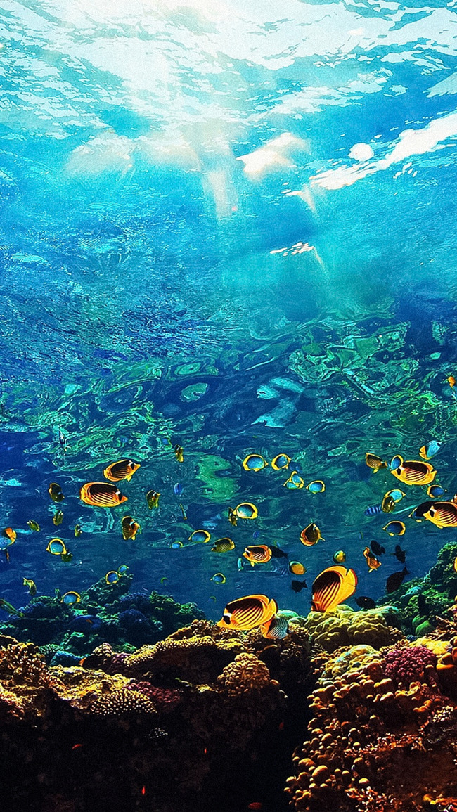 Coral Reef Reef Ridge Sea Background, Natural, Elevation, Water, Background image