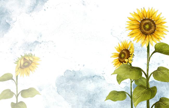 sunflower background  golden  pollen  flowers background image for free download