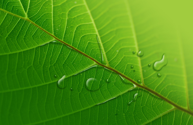 Walking Stick Insect Arthropod Leaf Background, Growth, Foliage, Close, Background image