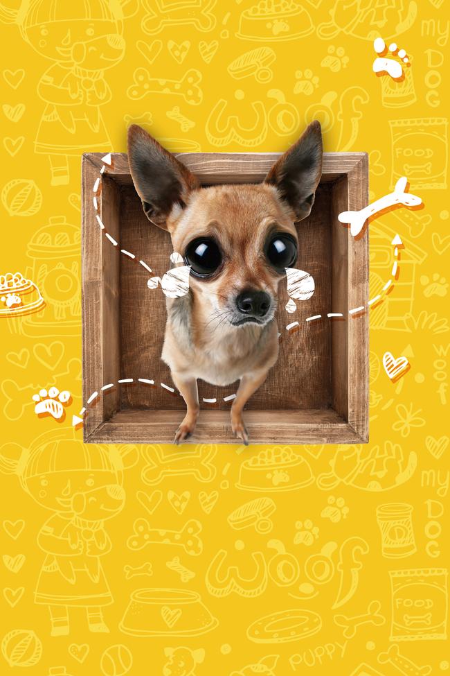 Chihuahua toy dog dog canine background Design Gráfico Embalagem Imagem Do Plano De Fundo