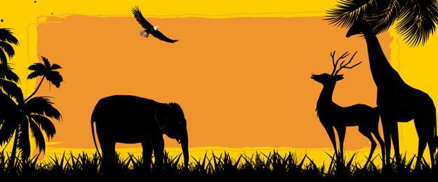 उष्णकटिबंधीय हाथी पक्षी कोको, पक्षी, अफ्रीका, उष्णकटिबंधीय पृष्ठभूमि छवि