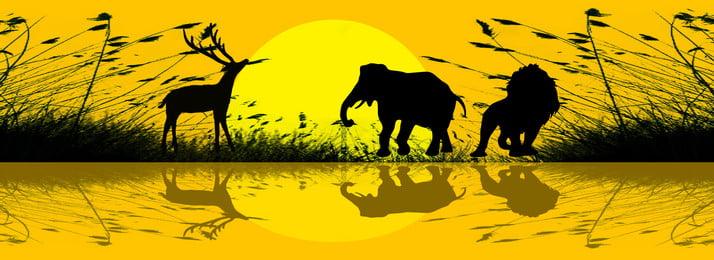 तेंदुआ हाथी नदी के किनारे पक्षी, पक्षी, चित्रण, हाथी पृष्ठभूमि छवि