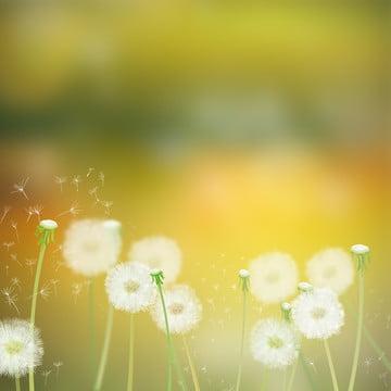 bồ công anh hạt giống cỏ lãng mạn , Poster, Cỏ, Chất Ảnh nền
