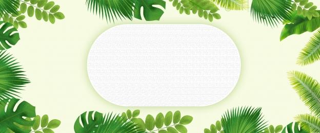 Green leaves palm leaves rays Palm Leaves Leaf Hintergrundbild