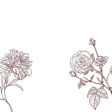 background romantic background valentine pencil , Rose Background, Drawn, Drawing Imagem de fundo