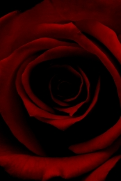 red roses lighting romance noble , Romance, Red Roses, Material Imagem de fundo
