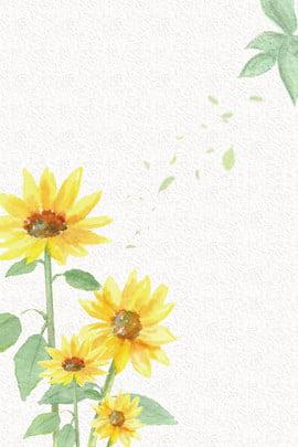 清新 向日葵 海報背景 清新背景 , 向日葵, 展板背景, 海報背景 背景圖片