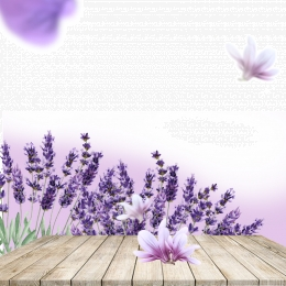 Lavender Background Photos And Wallpaper For Free Download