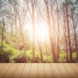 forest trees dreamy sunshine , Yellow, Green, Warm Imagem de fundo