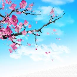 segar plum biru langit , Plum, Latar, Biru imej latar belakang