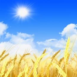 cây mùa thu vàng đầu thu vàng , Mùa, Cây, Sản Phẩm Mới Ảnh nền