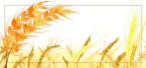 simple golden wheat field background food promotion, Banner, Wheat Field Background, Cereal Promotion Фоновый рисунок
