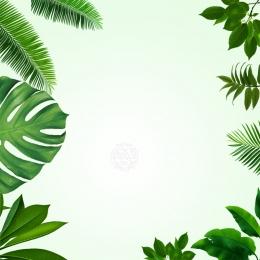 hijau segar alam daun hijau , Segar, Hijau, Daun imej latar belakang