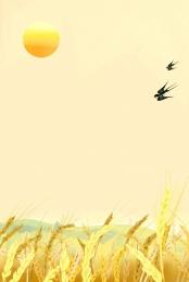鄉村 麥田 水稻 農村 , 鄉村, 收穫, 糧食 背景圖片