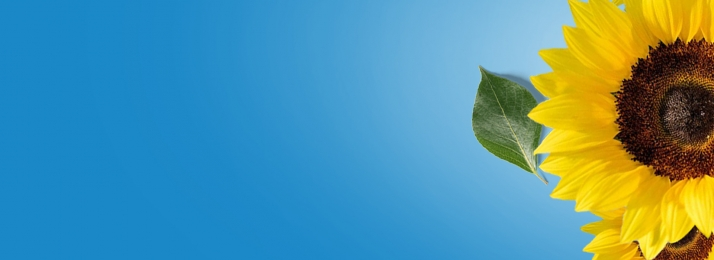 9月 9月 こんにちは ひまわり 9月の背景 9月バナー 青い空 背景画像