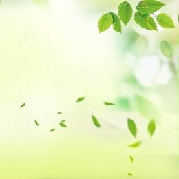 新鮮で自然な 緑の葉 家庭生活 日用品 , メインマップ, 新鮮で自然な, 家庭用品 背景画像