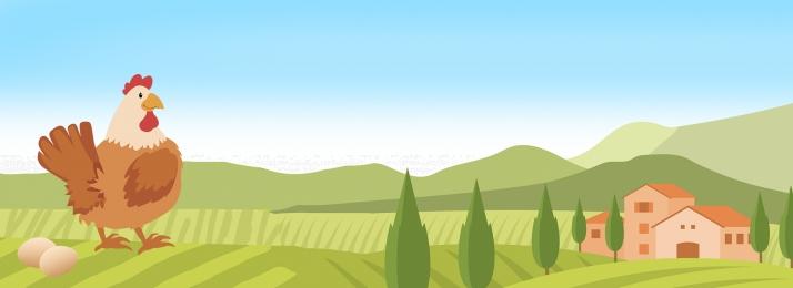 ग्रीन जैविक फार्महाउस चिकन, फार्म चिकन, Psd स्रोत फ़ाइल, तुजिया चिकन पृष्ठभूमि छवि